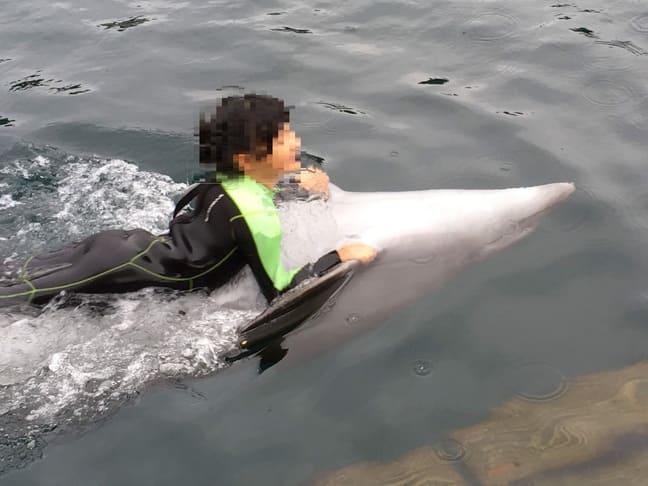 つくみイルカ島ではイルカと泳ぐことができます